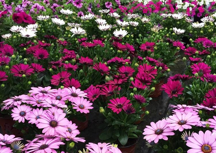 Unsere sommerpflanzen g rtnerei enge erwitte for Pflanzen laden berlin