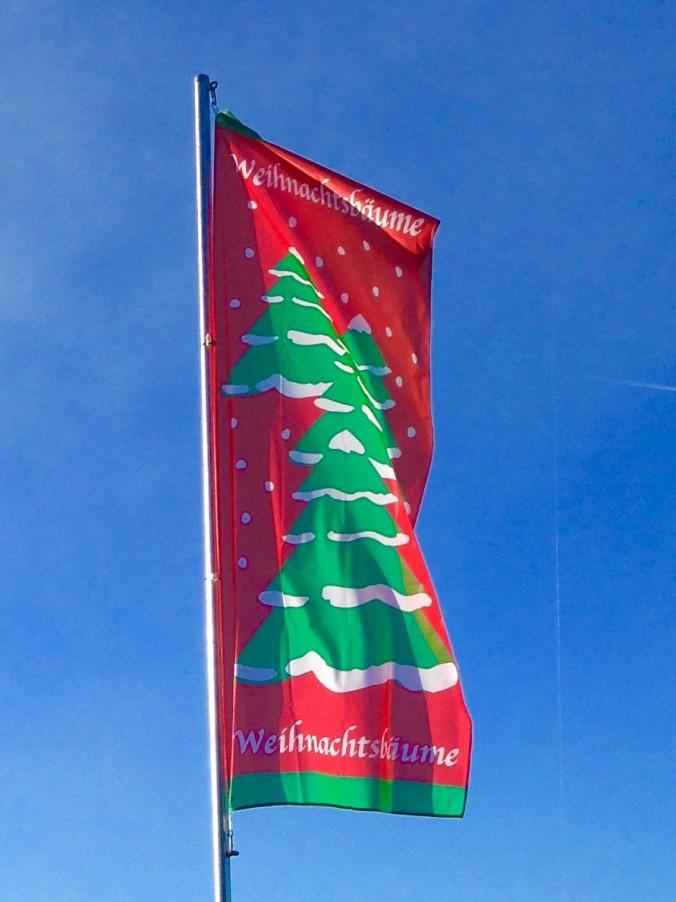 Weihnachtsbaum_Weihnachsbäume_Erwitte_2