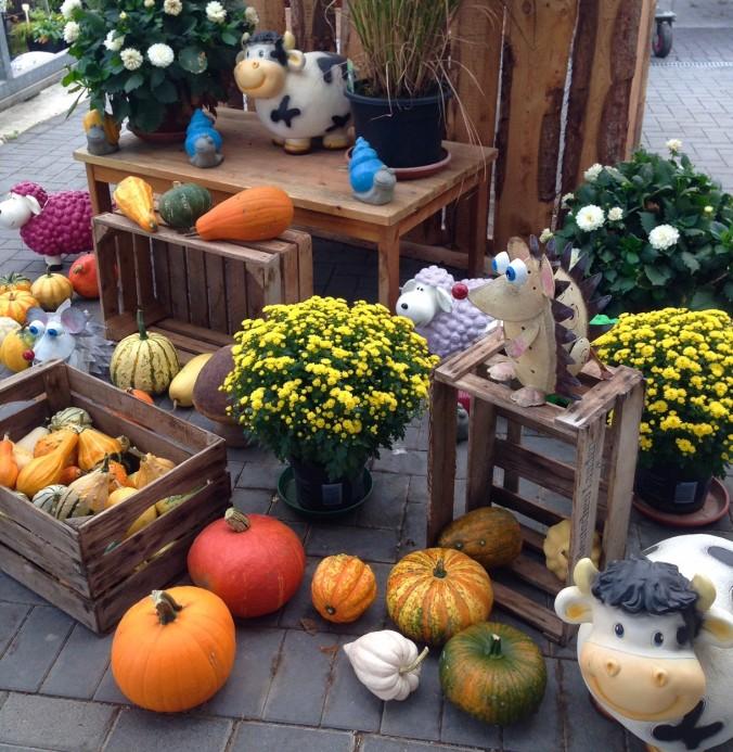 Start_Herbst_in Ihrer_Gärtnerei_herbstliches_Erwitte_Gaertnerei_Enge_September_Oktober_2017_Dekoration_Herbstpflanzen
