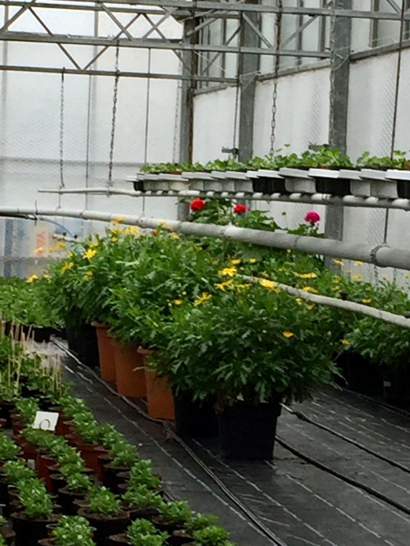 Kaufen_wo_die_Pflanzen_auch_wachsen_Gaertnerei_Enge_1