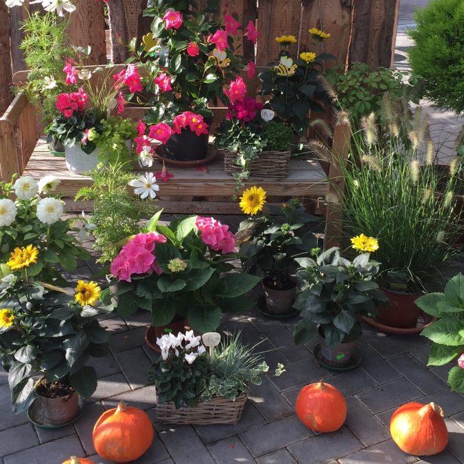 Herbst_Gaertnerei_Enge_Herbliches_Kuerbis_Halloween_BB